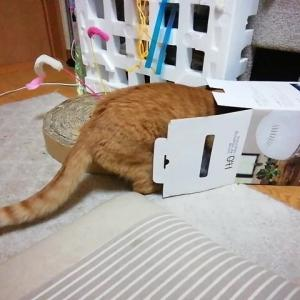 ホリホリマン 猫動画