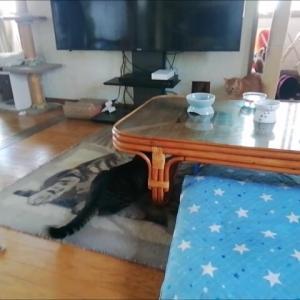 朝活 追いかけっこ 猫動画