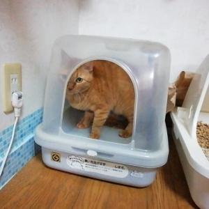 トイレの壁を カシカシ 猫動画