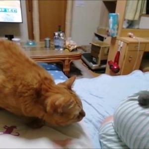 広い空間で毛玉ボール で遊んだ夜 猫動画