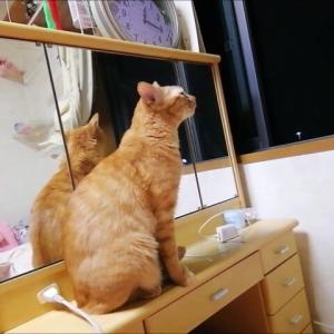 夜風をくんくん 猫動画