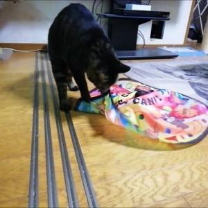 キャッチミーユーキャンで久々に遊びました 猫動画