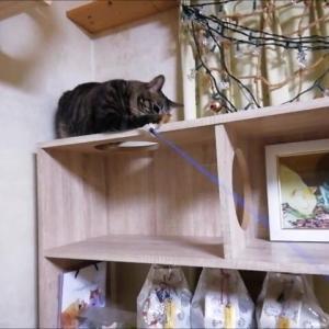 丸穴の棚で 猫釣り 猫動画