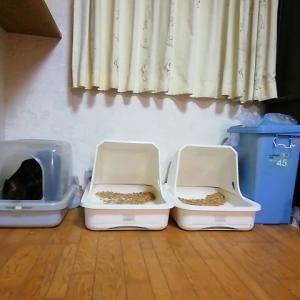 オチッコ タイム 猫動画