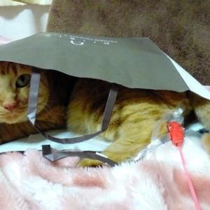 懲りない証 紙袋IN 猫動画