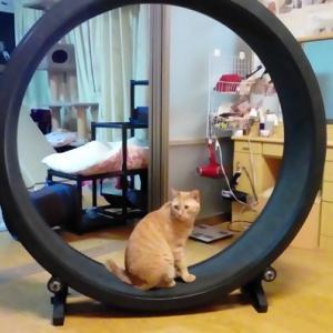 ホイール 破損の危機 猫動画