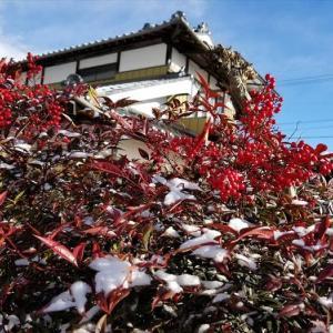 ★南天に淡雪が .。oO