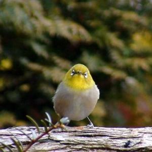 ★かわいい野鳥 .。oO