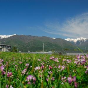 ★雪山とれんげ草 .。oO
