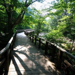 ★夏の赤沢自然休養林Vol.1 .。oO