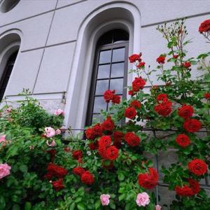 ★薔薇百景 その2 .。oO