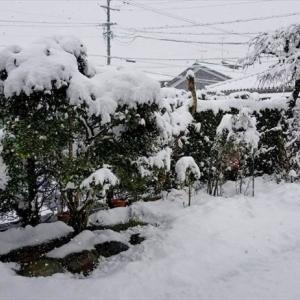 ★大変ですっ!大雪です! (≧▽≦) .。oO