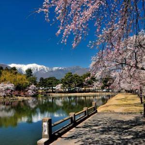 ★馬見塚公園の桜Vol.1 .。oO