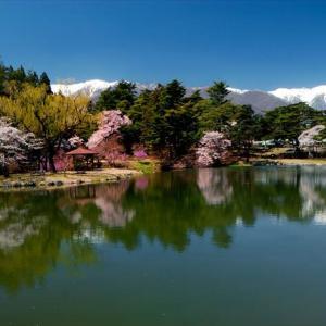 ★馬見塚公園の桜Vol.2 .。oO