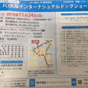54頭のビションフリーゼ大集合  インテックス大阪にて…