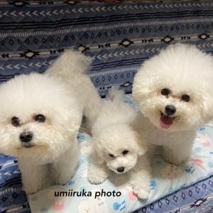 リオちゃんの赤ちゃん しあわせな家族写真