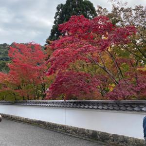 京都、紅葉を求めて永観堂〜銀閣寺
