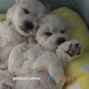リオちゃんの赤ちゃんズ 可愛い寝顔