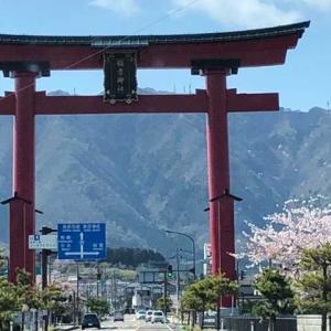 弥彦神社の花見