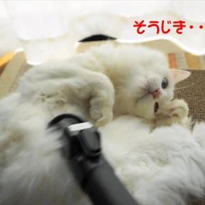No.1829 掃除機と猫
