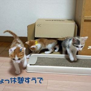 No.1851 子猫プロレス