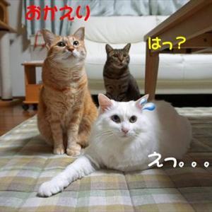 No.1775 同居人間増