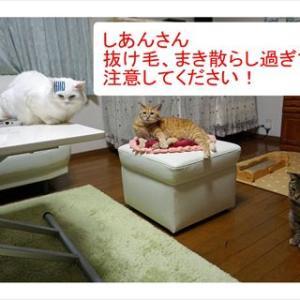 No.1778 集会