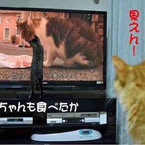 No.1784 コイズミちゃんとこっちゃん