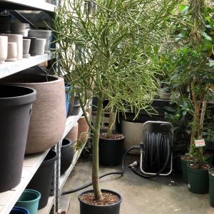 恵比寿にあった観葉植物専門店