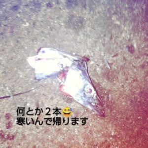 20191208秋グレ釣りに