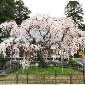 桜ドライブ3(栃木市・太山寺)