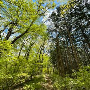 今日はみどりの日。栃木の緑をお届けします