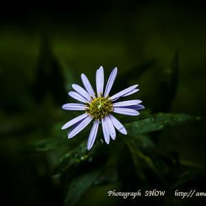 「雨の日のささやき」Shogo Hamada