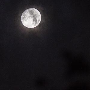 「 月光」 変化と前進