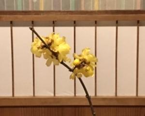 思い出の花