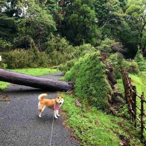 佐倉城址公園の台風の傷跡