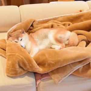 かぼちゃん色の毛布
