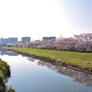 桜のパワーを頂きました