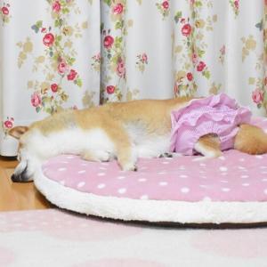 フリフリ快適パンツで熟睡かぼちゃん