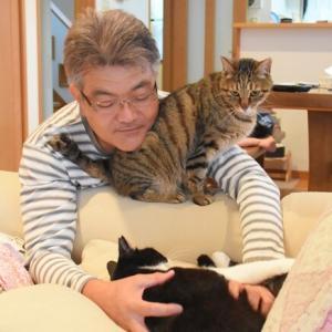 シマシマ猫とシマシマ父さん