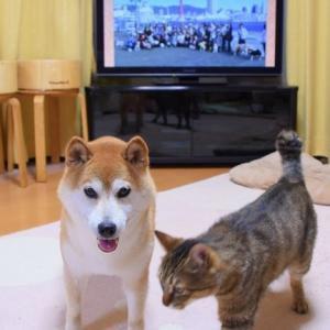 明日のポチたま(BSテレ東夜8時)見てね!