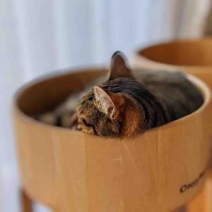 あの日の迷い子の子猫ちゃん
