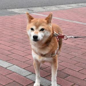 もう変態的に犬好きな花屋さん