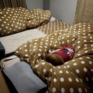 窮屈なベッド