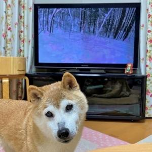 「犬とあそんちゅチャンネル」から青木湖の空気が伝わってきます!