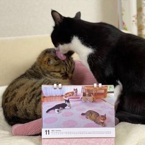 チャリティーカレンダーと一緒⑦