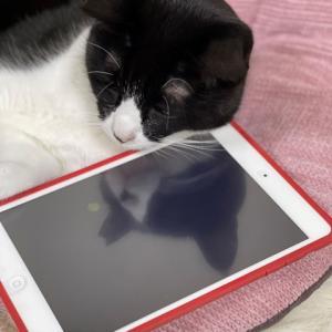 iPadに映ったイケてるオニちゃん