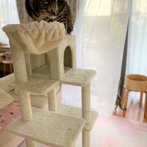 かぼす家3台目のキャットタワーです!