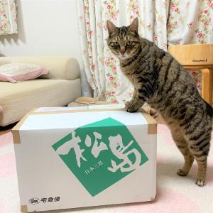 箱の中身は何でしょう?