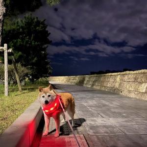 かぼちゃんの2021年秋の東北旅行⑫ ときめく松島の夜んぽ